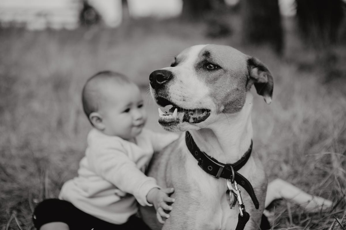 Family lifestyle pet portrait photo of baby and dog at muriwai beach auckland by sarah weber photography