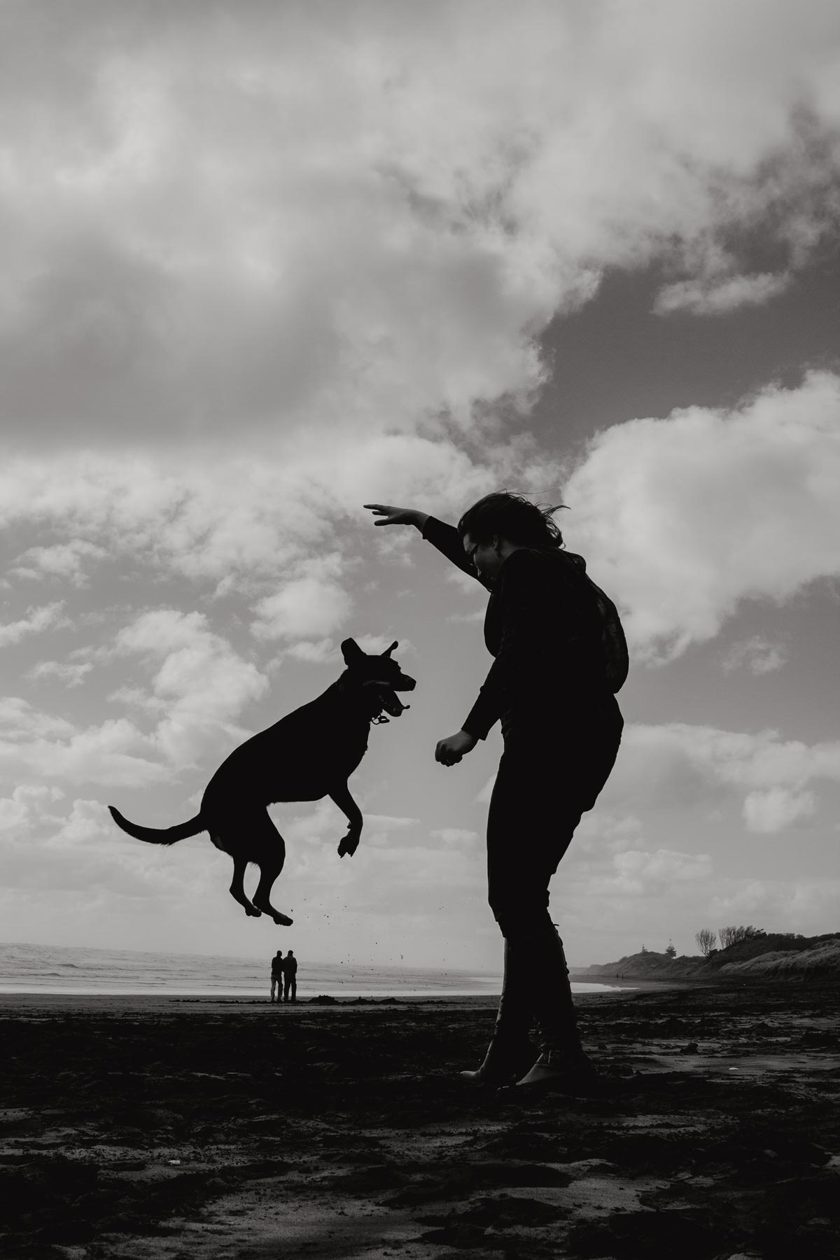 dog jumping silhouette on muriwai beach by sarah weber photography