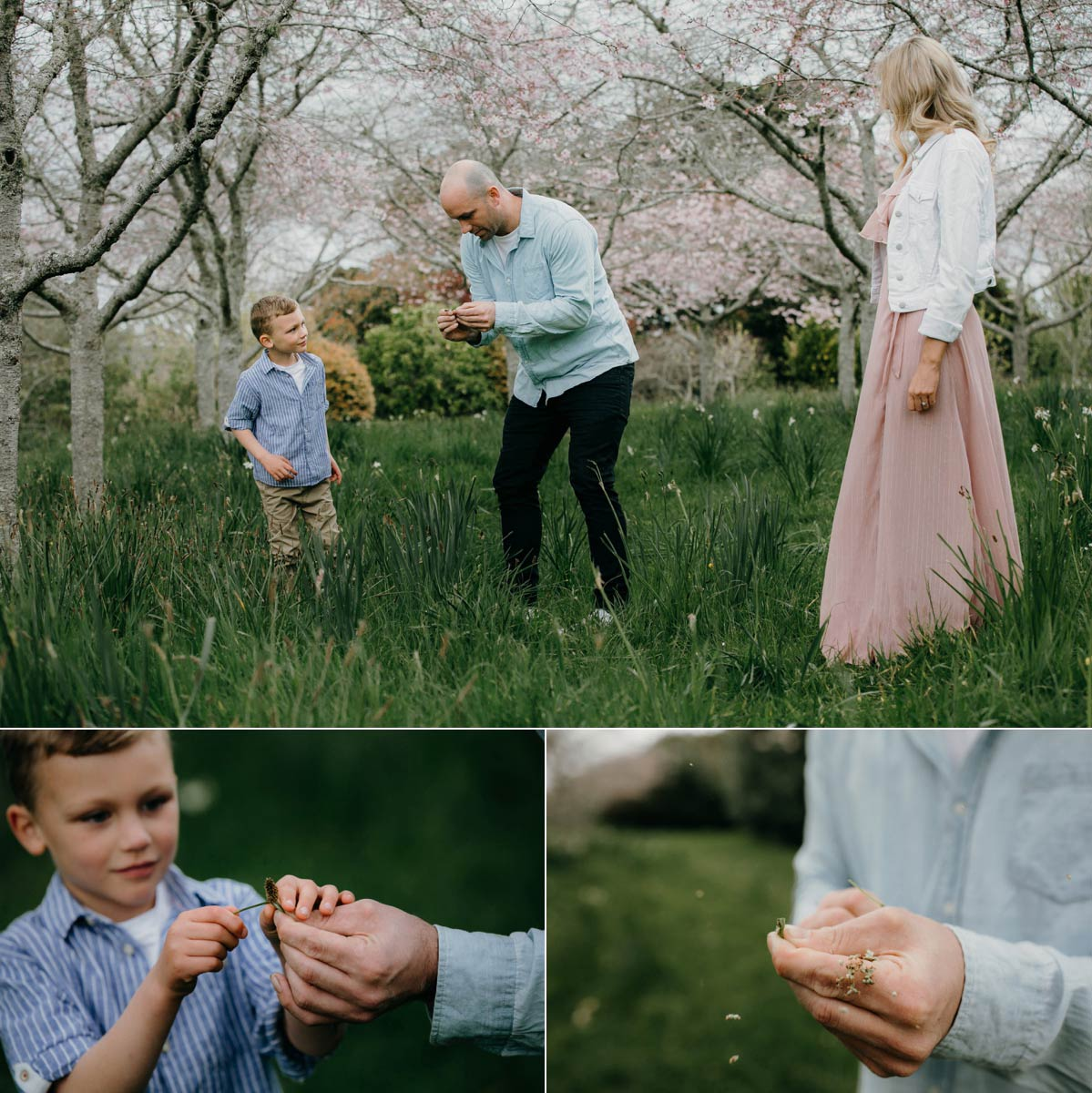 family exploring in auckland botanic gardens during a portrait photo session in spring cherry blossoms and daffodils season with sarah weber photography spring family photos auckland