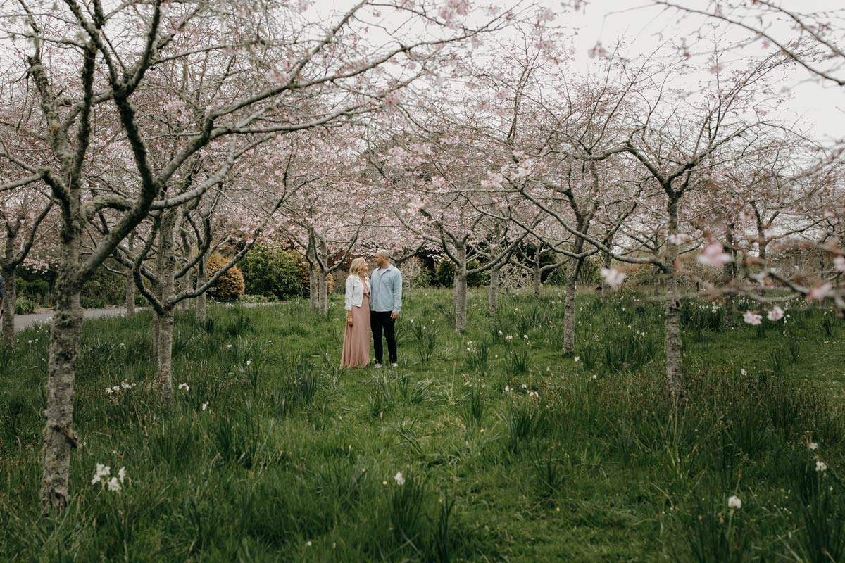 couple engagement lifestyle portrait in spring cherry blossoms, auckland botanic gardens during a family portrait photo session with sarah weber photography spring family photos auckland